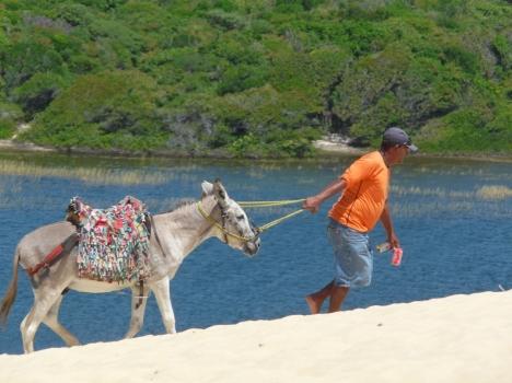 Mann mit Esel